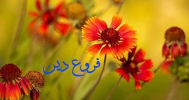جهاد، تروريسم و مردم سالاري (2)
