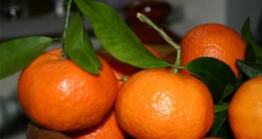 نارنگی در مقابل پرتقال