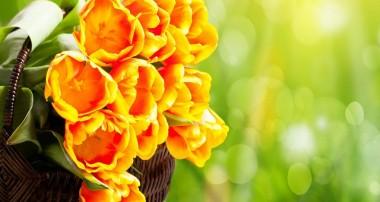 پاسداشت طبيعت در روزهای سبز بهار