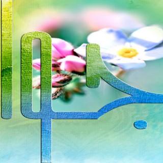 احادیث امام جواد علیه السلام : ۴ یاور انسان