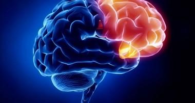 مواد غذایی که موجب بهبود فعالیت مغز میشوند