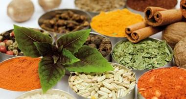 دارو شناسی در طب سنتی