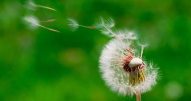 احادیث امام حسین علیه السلام : آرزوی شما چیست؟