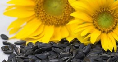 از حقایق تغذیهای درمورد تخمههای آفتابگردان خام غافل نباشید