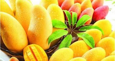 فواید سلامت پوست انبه: آیا خوردن پوست انبه بی خطر است؟