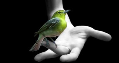 اگر پرنده ایی را بیازای انسانی خواهد مرد
