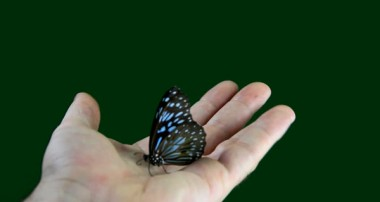 پروانه و پسرک