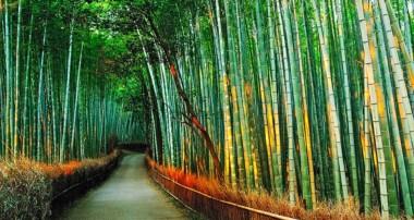 خواص درمانی جوانههای گیاه بامبو (نی)